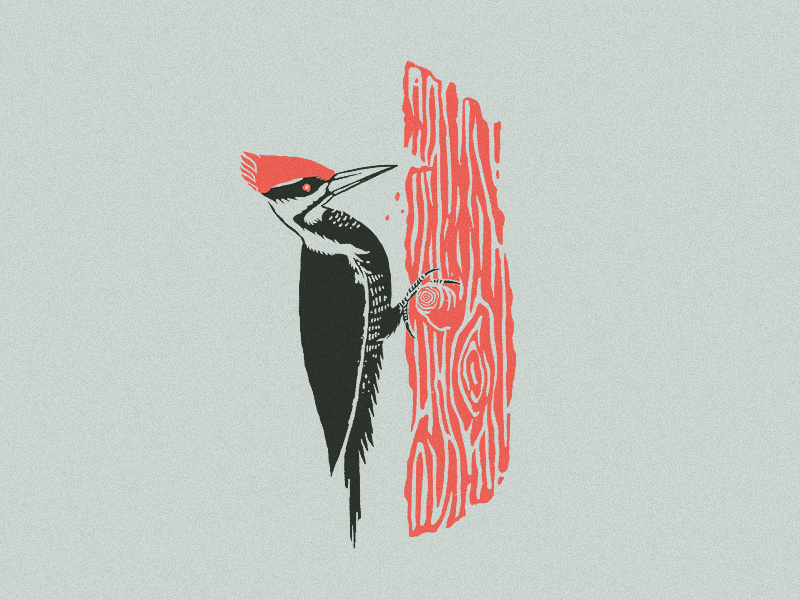 The Woodpecker Syndrome: People who create a loop of toxic discussions