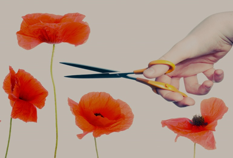 Tall Poppy Syndrome: When they try to sink you because you stand out
